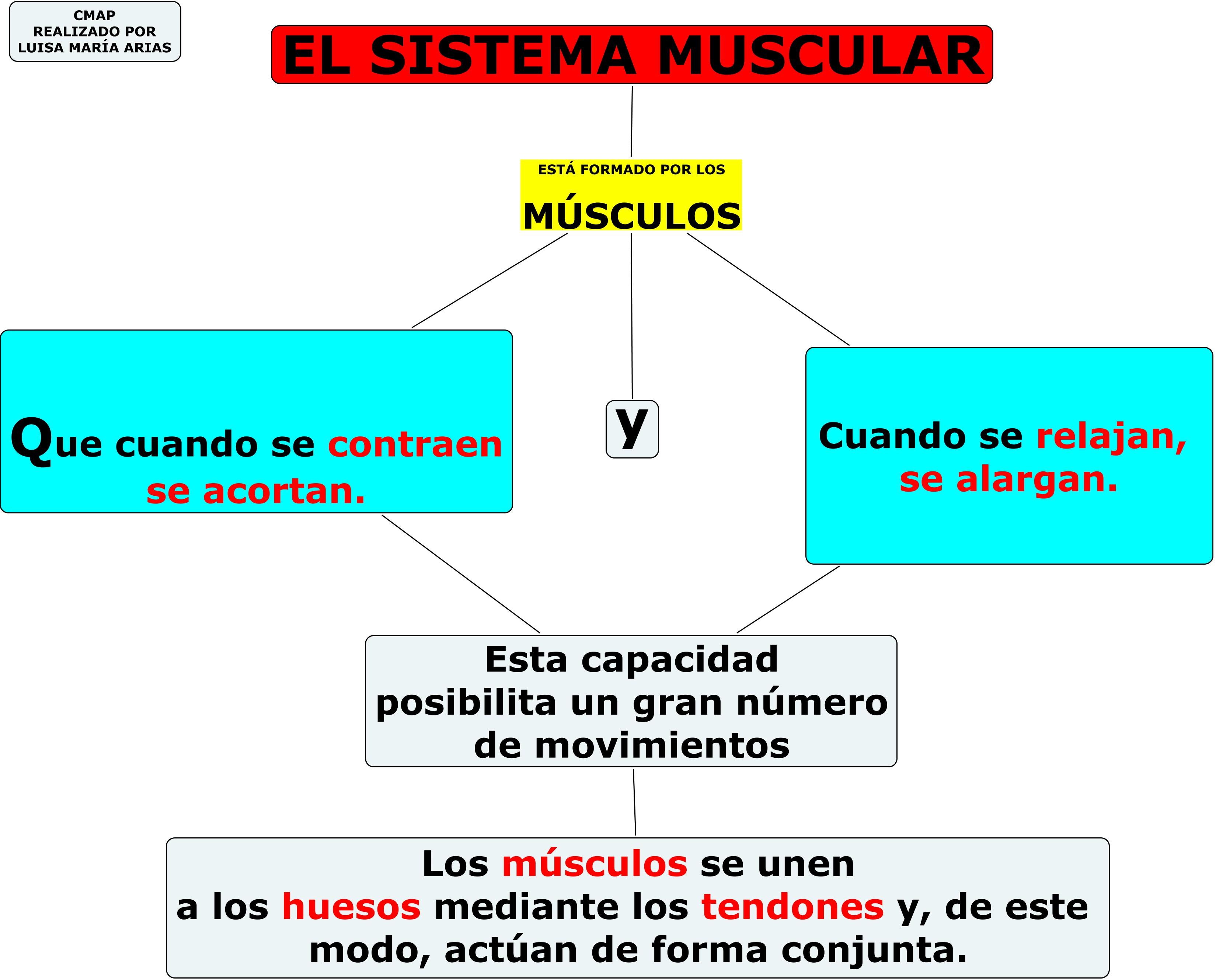 Mapa conceptual Musculos del Cuerpo Humano - LearningObjectRepository