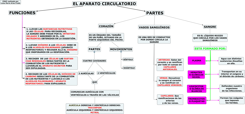APARATO CIRCULATORIO. MAPA CONCEPTUAL. | JUGANDO Y APRENDIENDO